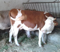 hongarije boerderij